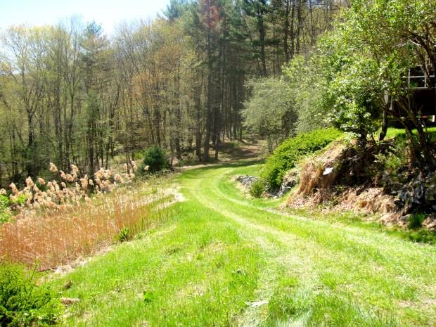 Grassy driveway