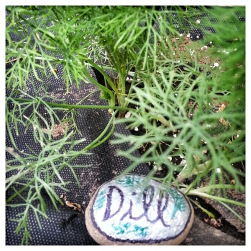 Dill 2