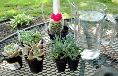 What you'll need for a succulent garden