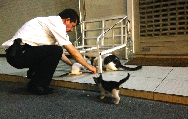 Security guard with cats