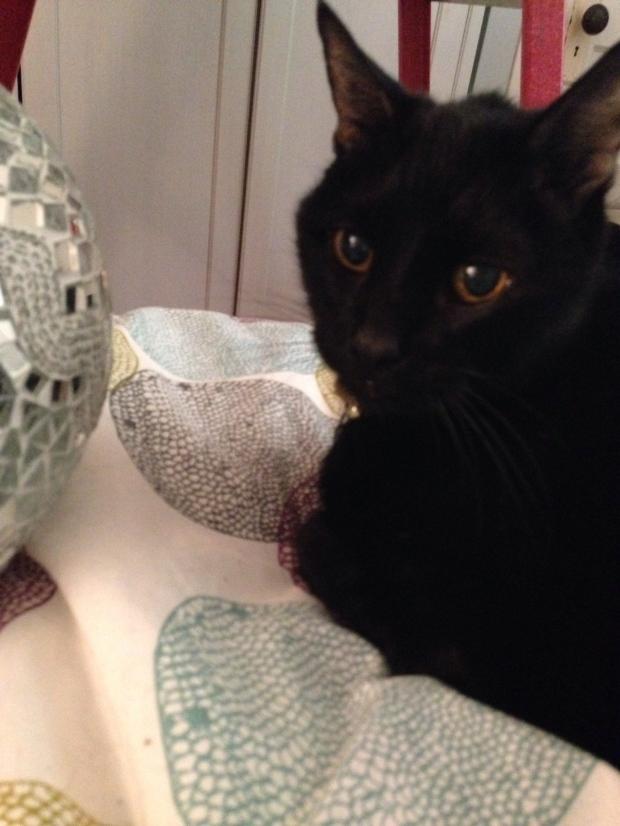 Cat lends a paw