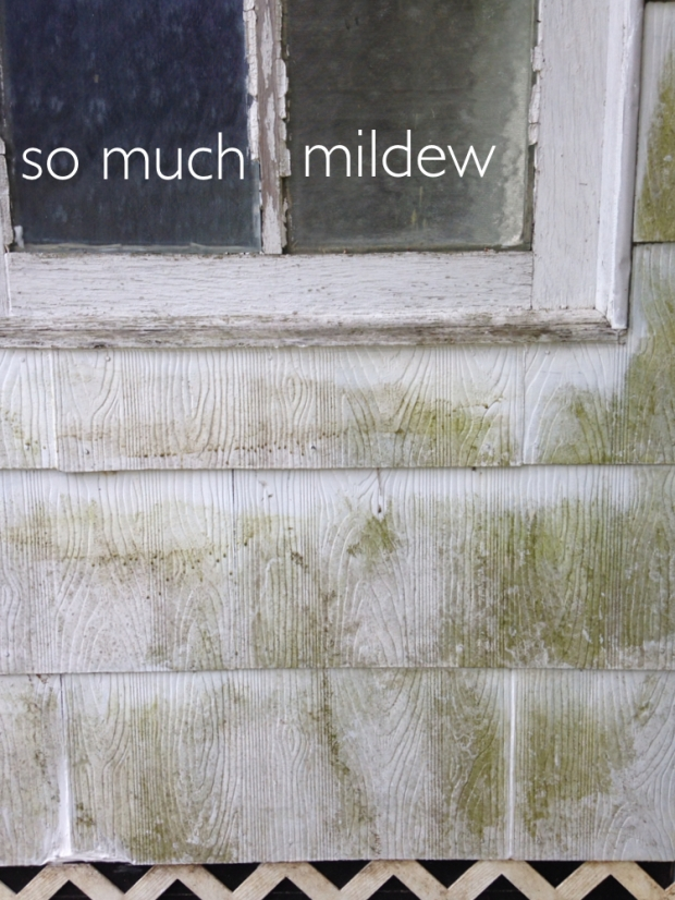 Mildew on siding